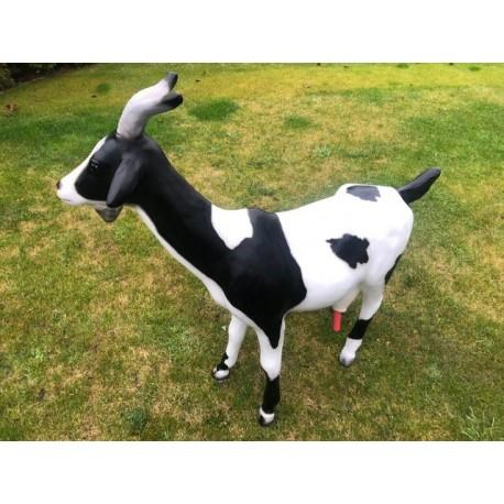 Koza do dojenia
